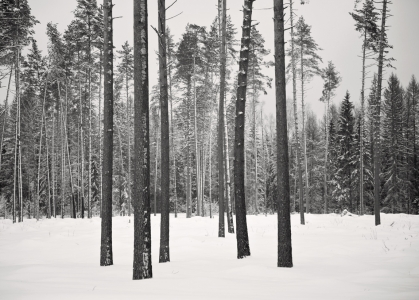 Landscape - Russian forest- 2013